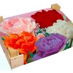 Kavel_113Tulpen-Dubbel-bloemen-Box